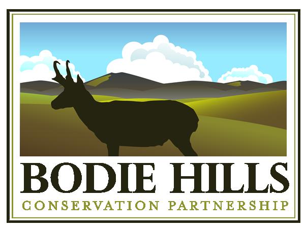 BodieHills_Logo_600